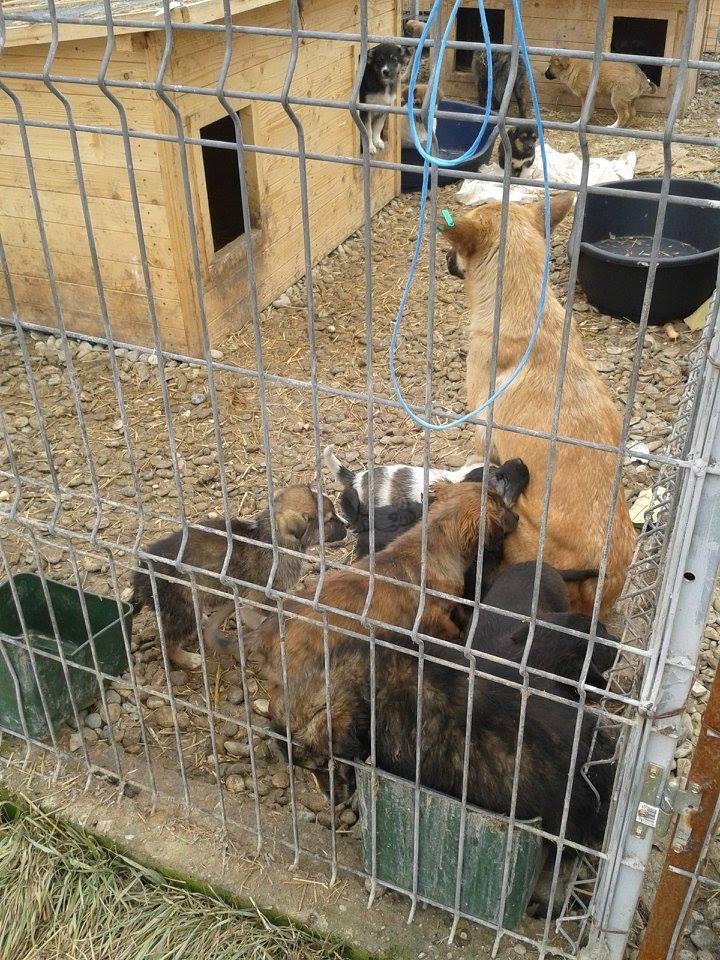 Welpen im rumänischen Tierheim Ploiesti