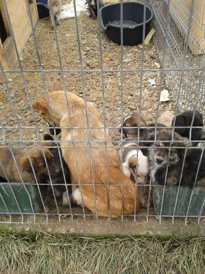 Hunde im rumänischen Tierheim Ploiesti
