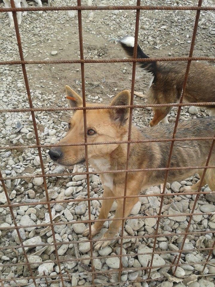 Abgemagerter Hund im rumänischen Tierheim Ploiesti