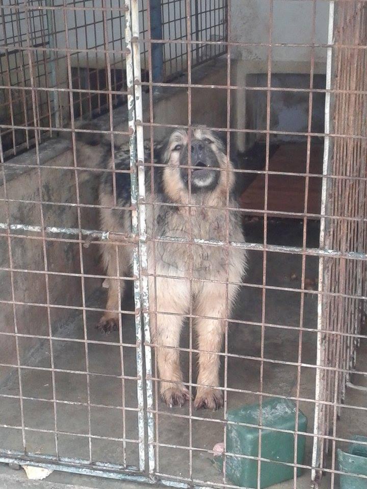 Rumänischer Straßenhund im Tierheim Ploiesti